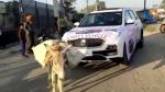 एमजी हेक्टर के ग्राहक ने कार में बंधवाया गधा, कहा यह कार इंसानों के लायक नहीं