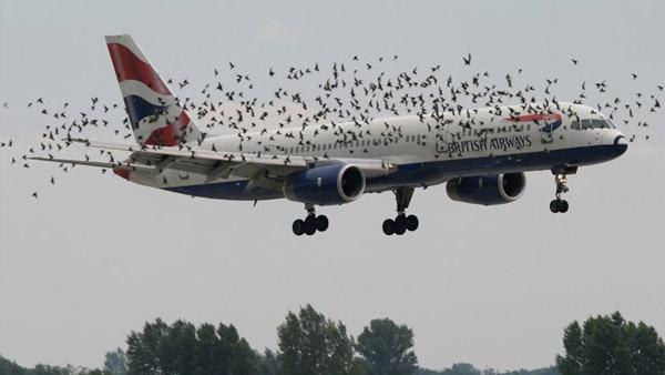 Bird Strike On Aeroplanes: उड़ते विमान से पक्षियों के टकराने पर होता है ये हाल, कैसे करते हैं बचाव? जानें