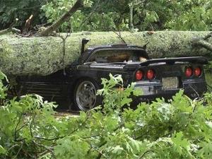 तुफान में शेवरले कार्वेट पर गिरा विशालकाय पेड़, भुर्ता बनी कार