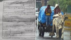अब बैल-गाड़ी पर लगा हजार रुपयें का ट्रैफिक फाइन, जानिये क्या है यह अजीबोगरीब मामला